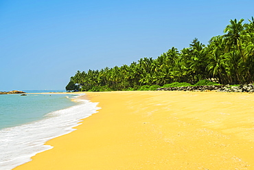 Leaning palm trees at lovely unspoilt deserted Kizhunna Beach, south of Kannur on the Kerala North coast, Kannur, Kerala, India, Asia