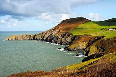 Lochtyn Peninsula's eroded cliffs at Llangrannog, The Giant Bica's rock tooth is lower right, Lochtyn, Ceredigion, Wales, United Kingdom, Europe