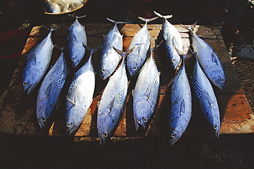 Fish for sale in the market at Hoi An on the Thu Bon River south of Danang, Vietnam, Asia