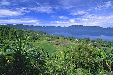 Rice terraces on eastern shore of crater lake, Lake Maninjau, West Sumatra, Sumatra, Indonesia, Southeast Asia, Asia
