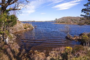 Mucross, Lake Killarney, Ring of Kerry, Munster, Republic of Ireland, Europe