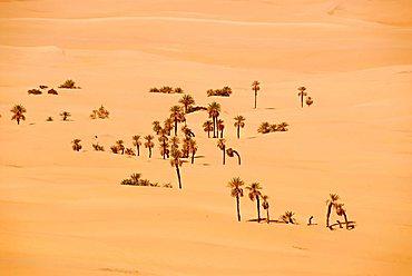Sporadic Phoenix palm trees in the sand Mandara Libya