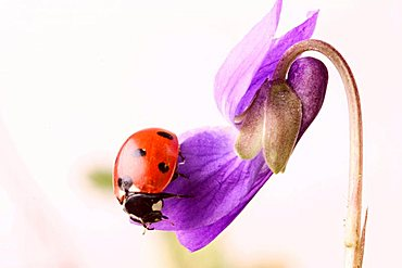 daisy on a violet