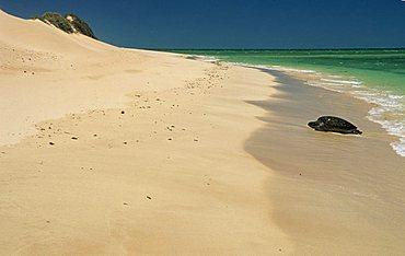 green turtle on a beach at Cape Range National Park, Ningaloo Reef Marine Park