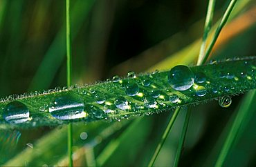 Waterdrops on blade of grass
