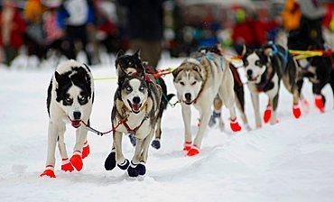 Huskies running during Finnmarksløpet Doglsed Race, Alta, Norway, Scandinavia