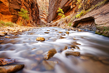 The Narrows, constriction of the Virgin River, Zion National Park, Utah, USA