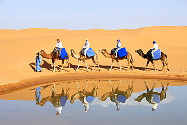 Four camels with riders mirror in water with sanddunes Erg Chebbi Merzouga Morocco
