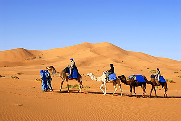 Four camels with riders at huge sanddune Erg Chebbi Merzouga Morocco