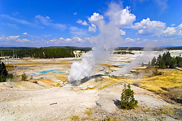 Steaming geysers, Norris Geyser Basin, Yellowstone National Park, Wyoming, USA, United States of America