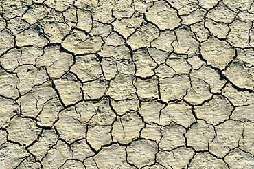 Desiccation cracks, Bonneville Speedway, Great Salt Lake Desert, Wendover, Utah, USA