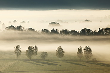 Morning fog over Loisach Moor or Loisach-Kochelsee-Moor near Grossweil, Blaues Land region, Upper Bavaria, Bavaria, Germany, Europe