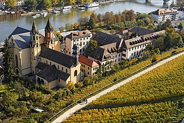 Wuerzburg, St Burkard church, vineyard Schlossberg, Franconia, Bavaria, Germany