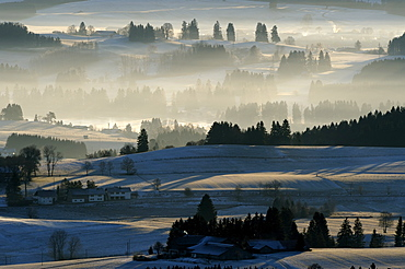 Forested area in morning light, Auerberg, Markt Oberdorf, Allgaeu, Bavaria, Germany, Europe