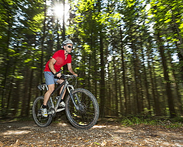 Cyclist on a mountainbike riding through a forest, Schurwald forest, Winterbach, Baden-Württemberg, Germany