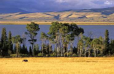 Red Rock Lakes National Wildlife Refuge, Montana, USA