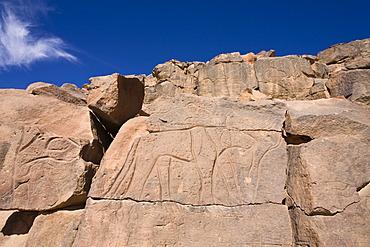 Rock engravings in the Wadi Mathendous, giraffe, Wadi Barjuj, stone desert, Libya, Sahara, North Africa, Africa