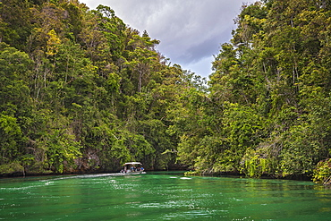 Forested limestone cliffs, Gam, Dampier Strait, Raja Ampat, Western New Guinea, Indonesia, Asia