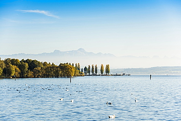 View of Lake Constance, in the back Swiss Alps with Säntis, Uhldingen-Mühlhofen, Lake Constance, Baden-Württemberg, Germany, Europe