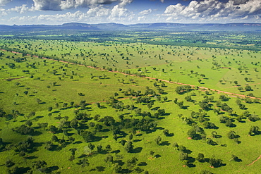 Agricultural fields with cattle farming, Southern Pantanal, Mato Grosso do Sul, Brazil, South America