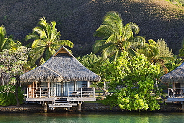 Bungalow with palm trees by the water, reflection, Mo'orea, French Polynesia, Oceania