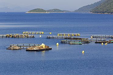 Fish farming Riba Mljet, Mljet Island, Dubrovnik-Neretva, Dalmatia, Croatia, Europe