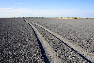 Tire tracks through Deception Pan in Deception Valley of the Central Kalahari Game Reserve, Botswana, Africa