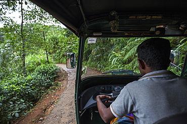 Tuk-tuk driver on small road, thick vegetation, Sinharaja Forest Reserve, Sri Lanka, Asia