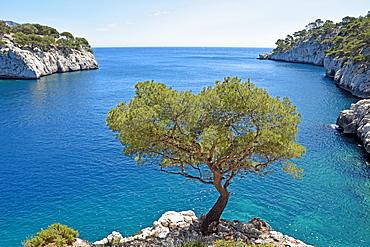 Calanque de Port Pin, Calanques National Park, Provence, France, Europe