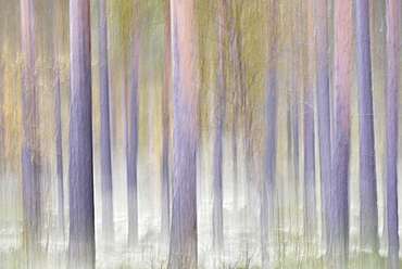 Forest in autumn, abstract, Rondane National Park, Norway, Europe
