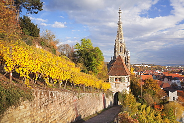 Neckarhaldenweg in the vineyards with Church of Our Lady, Esslingen, Baden-Württemberg, Germany, Europe