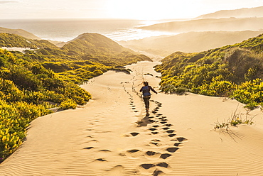 Woman running down dunes, sand dunes with yellow lupines (Lupinus luteus), Sandfly Bay, Dunedin, Otago Region, Otago Peninsula, Southland, New Zealand, Oceania