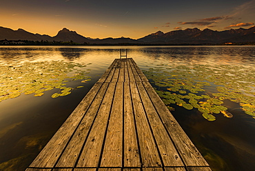 Dock at mountain lake with lily pads (Nymphaea), Allgäu Alps at back, sunrise, Hopfensee, Hopfen am See, Ostallgäu, Bavaria, Germany, Europe