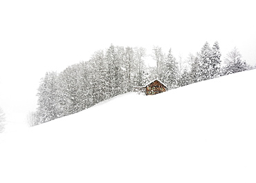 Mountain hut in front of winter forest, dense snowfall, Hittisau, Bregenz Forest, Vorarlberg, Austria, Europe