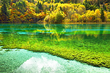 Five Flower Lake in autumnal environment, Jiuzhaigou National Park, UNESCO World Heritage Site, Sichuan Province, China, Asia