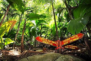 Tropical vegetation coco de mer, sea coconut (Lodoicea maldivica), Nature Reserve Vallee de Mai, UNESCO world heritage site, Praslin Island, Seychelles, Africa