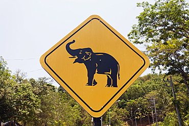 Road sign caution elephants, elephant camp, Phuket Province, Thailand, Asia
