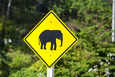 Street sign, pictogram of an elephant, northern Thailand, Thailand, Asia