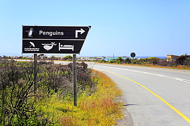 Direction signs, penguins and whale watching, Betty's Bay, Western Cape, South Africa, Africa