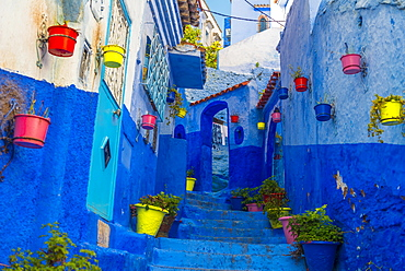 Narrow alley with colorful flowerpots, blue houses, Medina of Chefchaouen, Chaouen, Tangier-Tétouan, Morocco, Africa