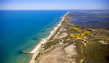 Mediterranean coast, brackish water area of the Etang de Melegal, Le Grau-du-Roi, Camargue, Languedoc-Roussillon, France, Europe