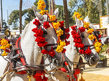 Decorated horses, Feria de Caballo, Jerez de la Frontera, Cadiz province, Andalusia, Spain, Europe