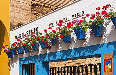 Red geraniums in blue flowerpots on a house wall, Fiesta de los Patios, Cordoba, Andalucia, Spain, Europe
