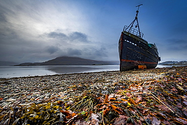 Ship wreck at Loch Eil with coloured leaves in the foreground, Fort William, west Highlands, Scotland, United Kingdom, Europe