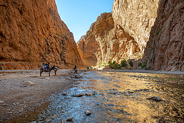Gorges Toudra or Todgha Gorge, river in gorge of sandstone rocks, Ait Baha, Tinghir, Morocco, Africa