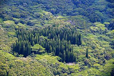 Dense vegetation, various trees, jungle, aerial view, Kaua'i, Hawai'i, USA, North America