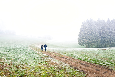 Two hikers on their way through fog landscape, Odenwald, Germany, Europe