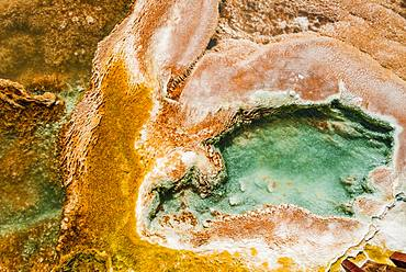 Detail photo, hot spring with orange mineral deposits and algae, Palette Springs, Upper Terraces, Mammoth Hot Springs, Yellowstone National Park, Wyoming, USA, North America
