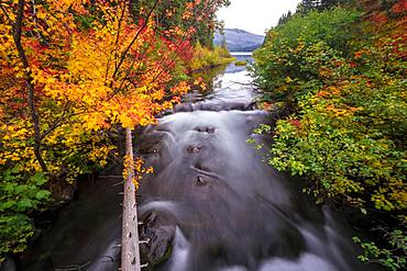Trees with colourful autumn colours, red orange leaves, autumn vegetation at the river Marion Creek, long-term photo, Oregon, USA, North America