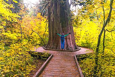 Young woman hugging a fat Western Red Cedar (Thuja gigantea), size comparison, Grove of the Patriarchs Trail, Mount Rainier National Park, Washington, USA, North America